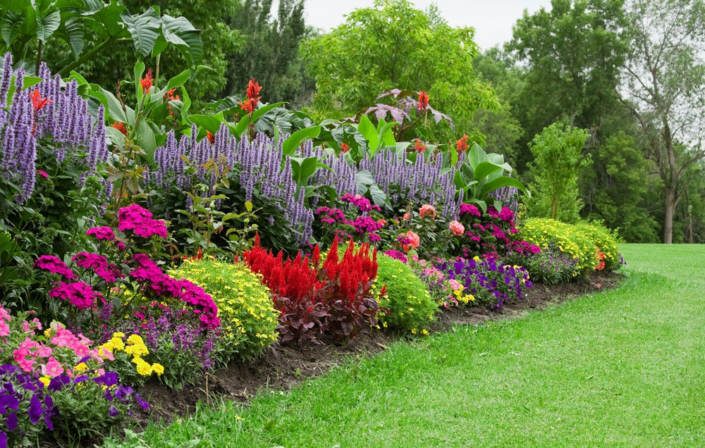 Best Organic Ways To Get Rid Of Garden Weeds