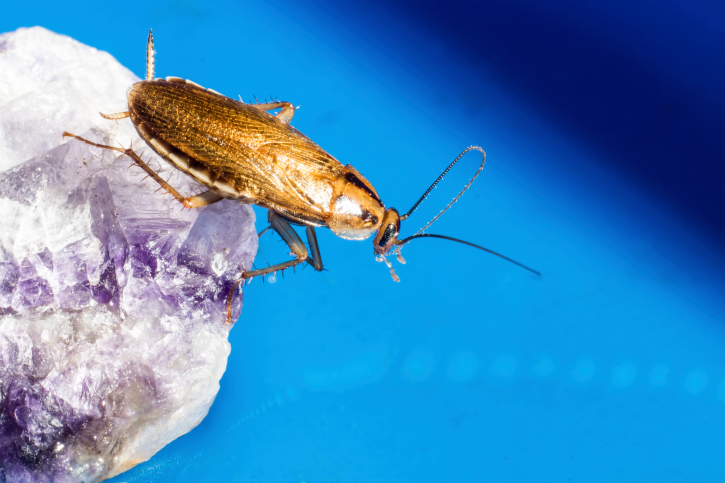 Get Rid From Cockroaches In 5 Simple Steps | Blog By RentMeToday
