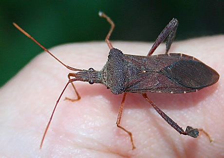 5 Easy Ways to Get Rid of Stink Bugs